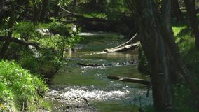 αλσατικό Ένα ρεύμα βουνών μετά από μια βροχή Μαγικό τοπίο του τροπικού δάσους και του ποταμού Άγρια, ζωηρή βλάστηση του δάσους απόθεμα βίντεο