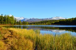 αλσατικό Λίμνη Ζ βουνών; idely, απόψεις της κορυφογραμμής Kurai στοκ φωτογραφίες με δικαίωμα ελεύθερης χρήσης