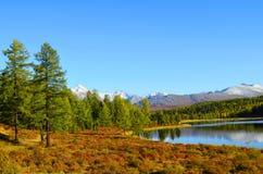 αλσατικό Λίμνη Ζ βουνών; idely, απόψεις της κορυφογραμμής Kurai στοκ εικόνα