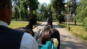 Αλόγων cinderella παραμυθιού γαμήλιων μεταφορών και ο μαγικός γάμος συνδέει τη νύφη και το νεόνυμφο στο πάρκο απόθεμα βίντεο