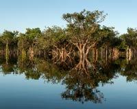 Αμαζόνειο δασικό να αντανακλάσει στοκ φωτογραφίες