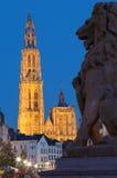 Αμβέρσα - καθεδρικός ναός της κυρίας μας με το άγαλμα λιονταριών και της οδού Suikerrui το βράδυ στοκ φωτογραφία