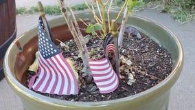 Αμερικανικές σημαίες στο δοχείο εγκαταστάσεων Στοκ εικόνες με δικαίωμα ελεύθερης χρήσης
