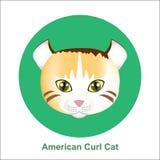 Αμερικανική γάτα μπουκλών κινούμενων σχεδίων στη διανυσματική απεικόνιση κύκλων Στοκ Εικόνες