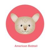 Αμερικανική γάτα ουρών βαριδιών κινούμενων σχεδίων στη διανυσματική απεικόνιση κύκλων Στοκ Φωτογραφία