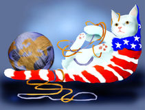 αμερικανική γάτα ελεύθερη απεικόνιση δικαιώματος