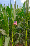 Αμερικανική επιχείρηση τομέων αγροτικού καλαμποκιού χώρας Στοκ Εικόνα