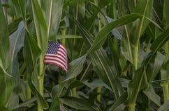 Αμερικανική επιχείρηση τομέων αγροτικού καλαμποκιού χώρας Στοκ εικόνες με δικαίωμα ελεύθερης χρήσης