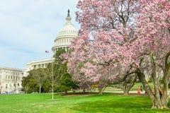 Αμερικανική Capitol οικοδόμηση την άνοιξη, Washington DC, ΗΠΑ Στοκ φωτογραφία με δικαίωμα ελεύθερης χρήσης