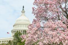 Αμερικανική Capitol οικοδόμηση την άνοιξη, Washington DC, ΗΠΑ Στοκ Εικόνα