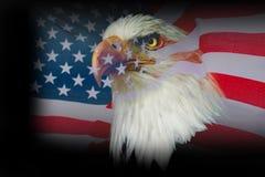 Αμερικανικός αετός ταπετσαριών με την ΑΜΕΡΙΚΑΝΙΚΗ σημαία Στοκ Εικόνα