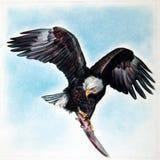αμερικανικός αετός Στοκ φωτογραφία με δικαίωμα ελεύθερης χρήσης