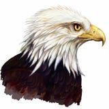 αμερικανικός αετός Διανυσματική απεικόνιση