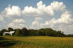 αμερικανικό αγρόκτημα Στοκ Εικόνες