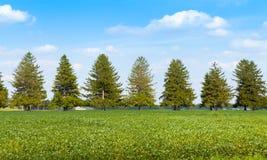 Αμερικανικό καλλιεργήσιμο έδαφος Στοκ φωτογραφίες με δικαίωμα ελεύθερης χρήσης