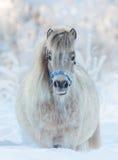 Αμερικανικό μικροσκοπικό άλογο - φοράδα palomino Στοκ Φωτογραφίες