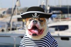 Αμερικανικό μπουλντόγκ που ντύνεται σε έναν ιματισμό πειρατών Στοκ φωτογραφία με δικαίωμα ελεύθερης χρήσης