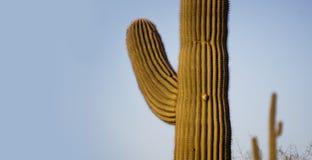 Αμερικανικό νοτιοδυτικό σημείο εμβλημάτων χαιρετισμού δέντρων Saguaro Στοκ εικόνες με δικαίωμα ελεύθερης χρήσης