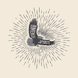 αμερικανικό πνεύμα Ορισμένη τρύγος διανυσματική απεικόνιση του αετού Ελεύθερη απεικόνιση δικαιώματος