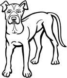 Αμερικανικό σκυλί του Bull διανυσματική απεικόνιση
