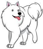 Αμερικανικό των Εσκιμώων σκυλί κινούμενων σχεδίων ελεύθερη απεικόνιση δικαιώματος
