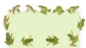αμερικανικό φαιάς ουσίας δάσος hyla βατράχων πράσινο Στοκ Εικόνες