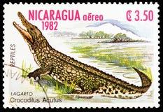 Αμερικανικό acutus Crocodyle Crocodylus, ερπετά serie, circa 1982 στοκ φωτογραφία με δικαίωμα ελεύθερης χρήσης