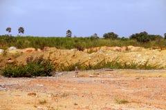 Αμμοχάλικο και χώμα στο εργοτάξιο οικοδομής για να είναι στον τομέα του ζαχαροκάλαμου Στοκ Φωτογραφία