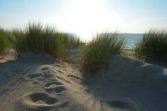 Αμμόλοφοι άμμου με τη χλόη αμμόλοφων στη Βόρεια Θάλασσα με το φως του ήλιου Στοκ Φωτογραφία