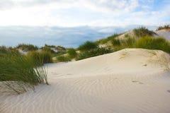 Αμμόλοφοι άμμου στην πορτογαλική ατλαντική ακτή Στοκ Εικόνες