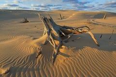 Αμμόλοφοι άμμου Silver Lake Στοκ φωτογραφίες με δικαίωμα ελεύθερης χρήσης