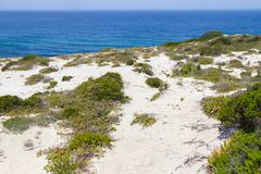 Αμμόλοφοι, βλάστηση και ωκεανός σε Arrifana Στοκ Εικόνα