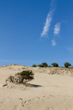 Αμμόλοφοι με τον ουρανό στην ανασκόπηση Στοκ Φωτογραφίες