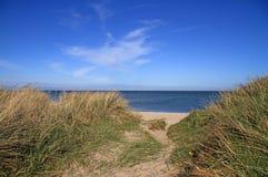 αμμόλοφοι παραλιών Στοκ Εικόνες