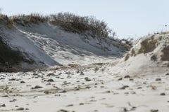 Αμμόλοφοι στα τέλη του χειμώνα στο σάντουιτς, Μασαχουσέτη Στοκ φωτογραφία με δικαίωμα ελεύθερης χρήσης