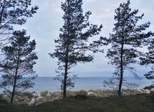 Αμμόλοφοι της ακτής της θάλασσας της Βαλτικής στη βόρεια Γερμανία Στοκ Εικόνα