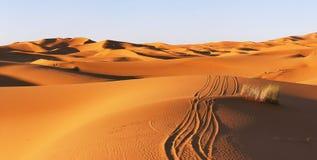 Αμμόλοφοι της ερήμου Σαχάρας Στοκ Εικόνες