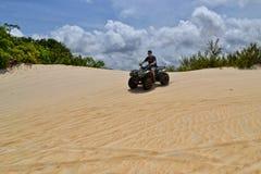 Αμμόλοφοι του maracajau στοκ εικόνα με δικαίωμα ελεύθερης χρήσης