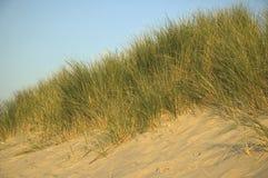 αμμόλοφοι Στοκ Εικόνες