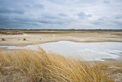 αμμόλοφοι texel Στοκ Φωτογραφίες