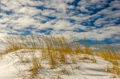 Αμμόλοφος άμμου που καλύπτεται με το χιόνι και τις χρυσές χλόες στοκ φωτογραφία με δικαίωμα ελεύθερης χρήσης