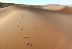 αμμόλοφος Μαροκινός ερήμ&om Στοκ Εικόνα