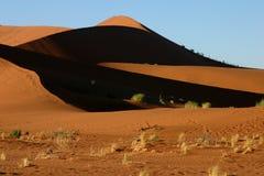 αμμόλοφος Ναμιμπιανός στοκ εικόνες