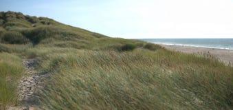 Αμμόλοφος Στοκ εικόνες με δικαίωμα ελεύθερης χρήσης
