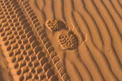 αμμόλοφος Στοκ φωτογραφίες με δικαίωμα ελεύθερης χρήσης