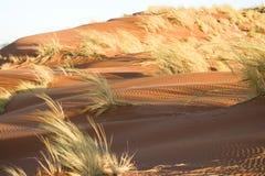 αμμόλοφος Στοκ εικόνα με δικαίωμα ελεύθερης χρήσης