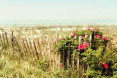 Αμμόλοφοι άμμου και hibiscus Στοκ εικόνες με δικαίωμα ελεύθερης χρήσης