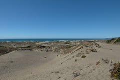 Αμμόλοφοι άμμου στη παράλια Ειρηνικού κοντά στον κόλπο Arcata Στοκ φωτογραφία με δικαίωμα ελεύθερης χρήσης