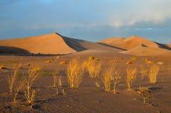 Αμμόλοφοι άμμου φρεατίων Stovepipe, εθνικό πάρκο κοιλάδων θανάτου στοκ εικόνα