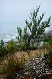 Αμμόλοφοι άμμου Kenosha Στοκ φωτογραφία με δικαίωμα ελεύθερης χρήσης